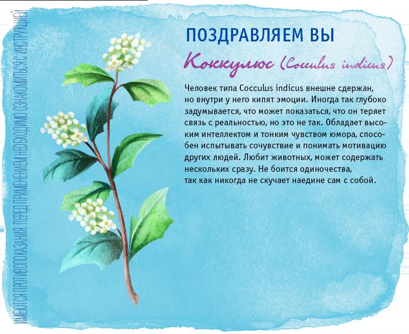 лекарственное растительные препараты противмикробного действия